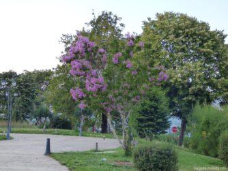 В одном из парков Несебра