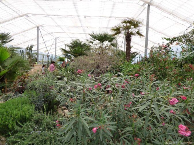 В теплице ботанического сада в Балчике