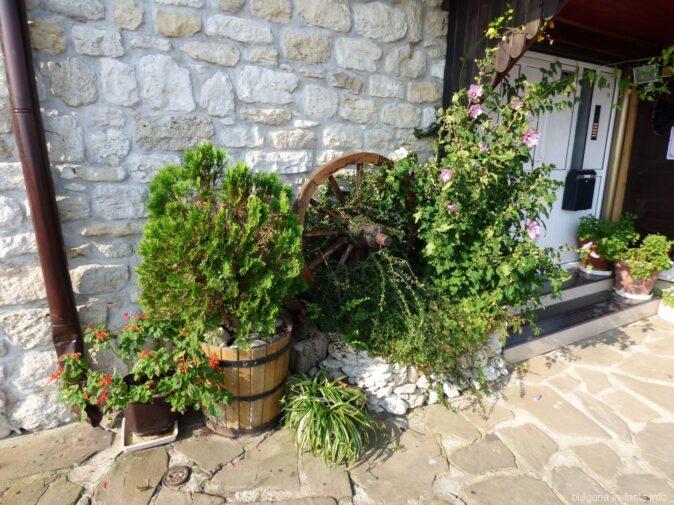 Зеленые растения в старом Несебре