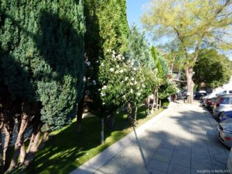 Зелень в городе Поморье