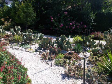 Малая часть коллекции кактусов ботанического сада в Балчике