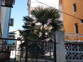 Пальмы в жилых двориках города