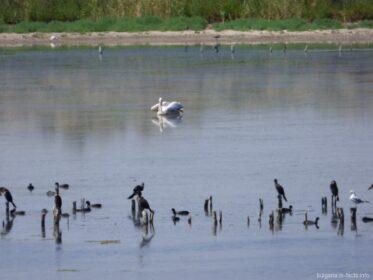 Птицы на Поморийском озере