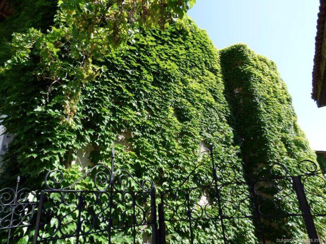 Стены, покрытые плющем
