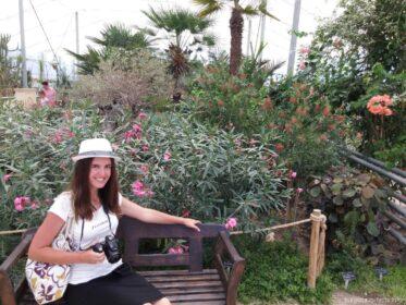 Теплица в саду Балчика