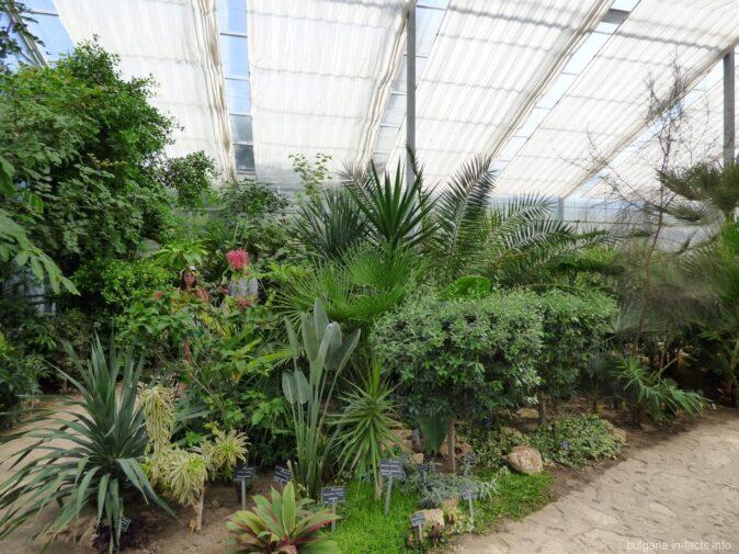 Тропики в ботаническом саду Балчика