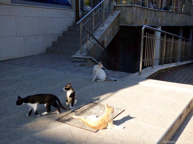 Царство кошек