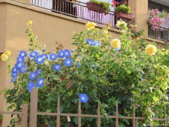 Цветы во дворах Болгарии
