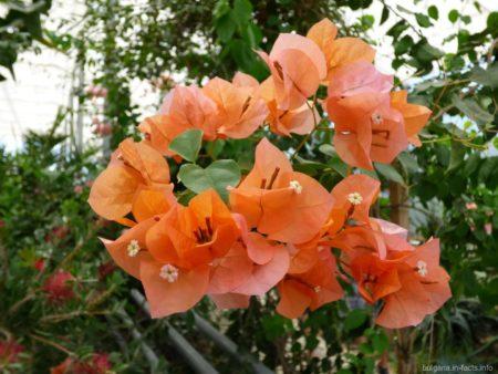 Цветы в оранжерее ботанического сада