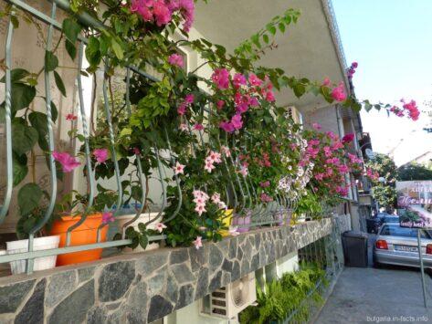 Яркие цветы в Поморье