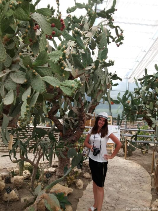 Гигантские кактусы