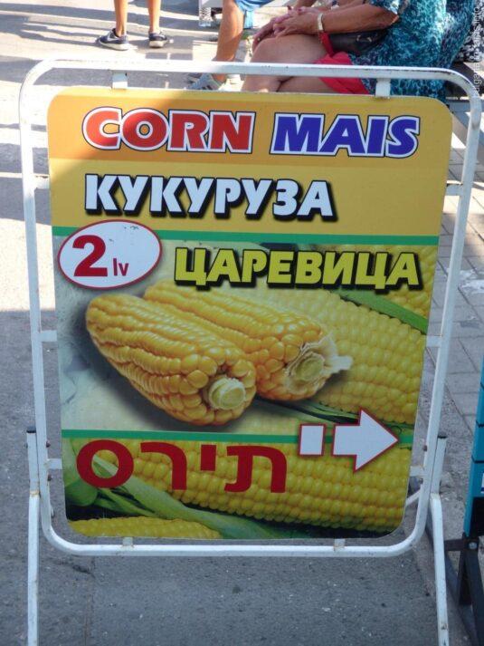 Кукуруза на Солнечном береге