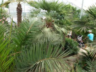 Пальмы в ботаническом саду Балчика