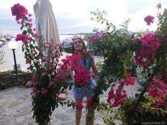 Цветы в Несебре на каждом углу