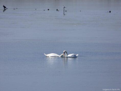 Нежная красота на Поморийском озере