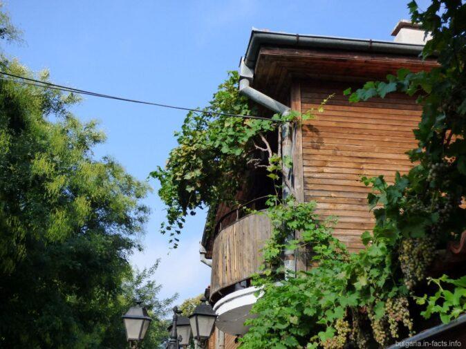 Зеленые растения в Болгарии