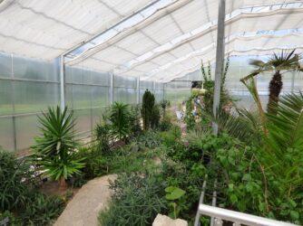 Пальмы и суккуленты в теплице ботанического сада в Балчике