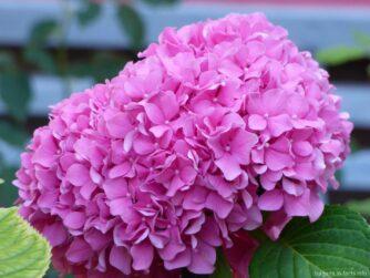 Красивые растения Болгарии